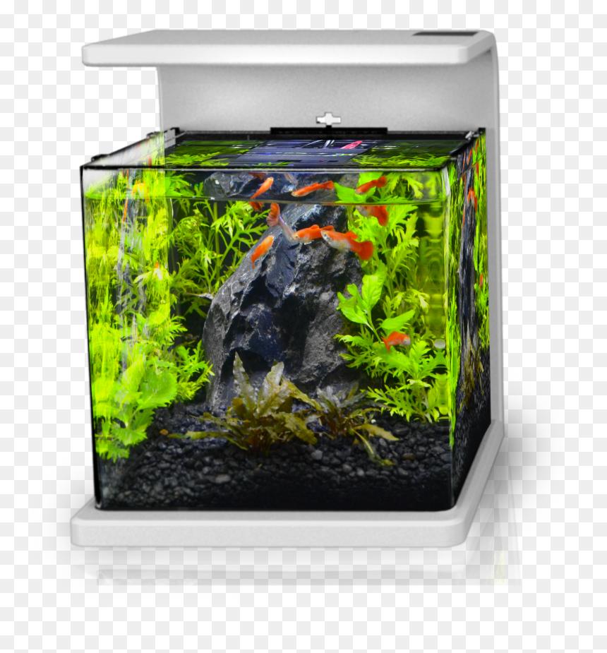 Dragon Stone Aquascape Nano Tank Hd Png Download Vhv