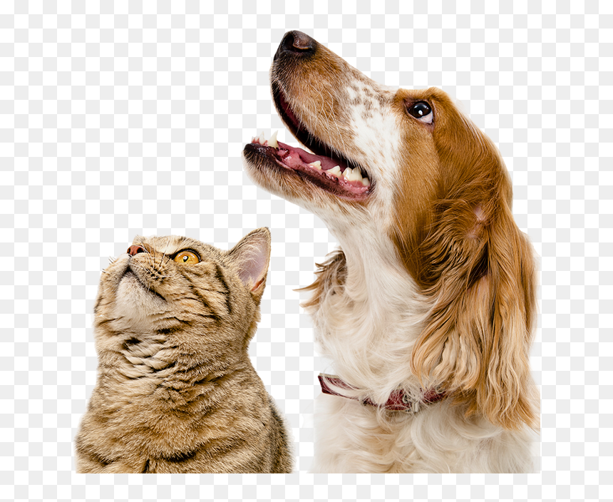Dogs Cat And Dog Background Hd Png Download Vhv