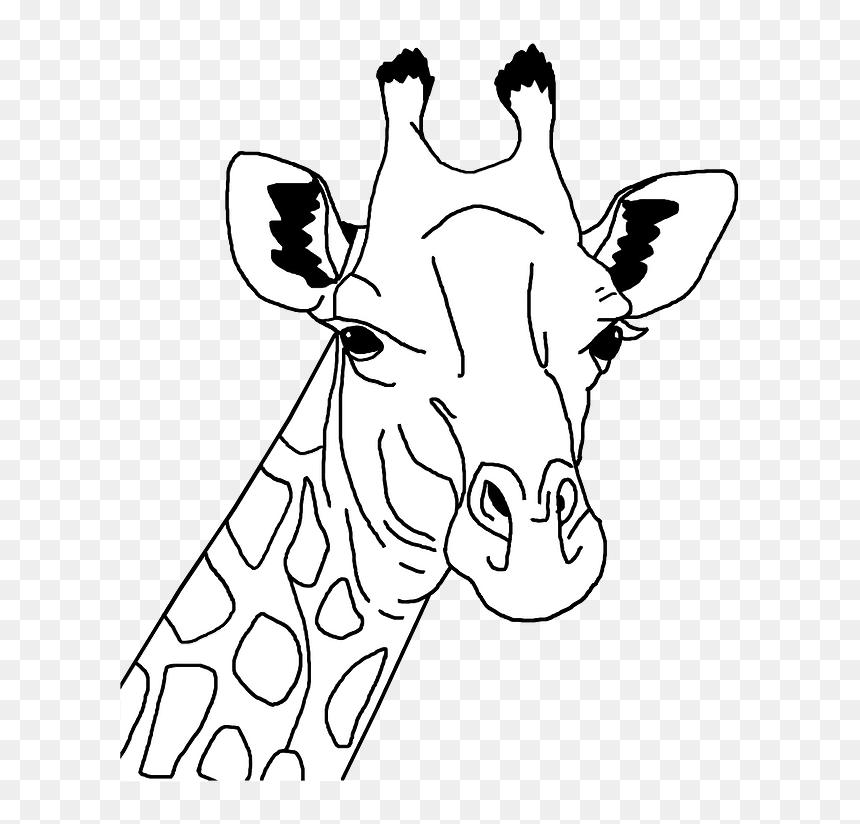 Giraffe Head Clipart Gambar Kepala Jerapah Kartun Hitam Putih Hd Png Download Vhv